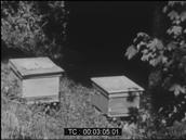 Les abeilles de Monsieur Gentet