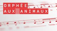 Le nouveau opéra pour enfants en ligne Orphée aux animaux.